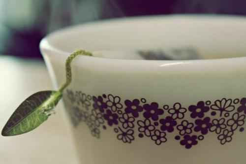 peace-love-sushi:  Tea time :)