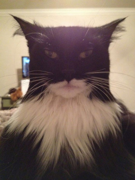 Said Gotham's Police Commissioner James Gordon about the mysterious Batcat:  …he's the hero Gotham deserves, but not the one it needs right now. So, we'll hunt him, because he can take it. Because he's not our hero. He's a silent guardian. A watchful protector. A Dark Kitteh.  (via MTV Geek - Gotham Needs Its True Hero, And That Hero Is The Batcat)