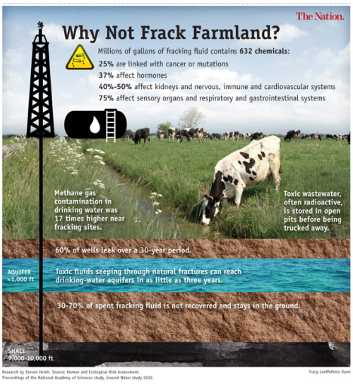 "Check out this article on the scary consequences ""fracking"" is having on our food supply.  …Fracking a single well requires up to 7 million gallons of water, plus an additional 400,000 gallons of additives, including lubricants, biocides, scale and rust inhibitors, solvents, foaming and defoaming agents, emulsifiers and de-emulsifiers, stabilizers and breakers. About 70 percent of the liquid that goes down a borehole eventually comes up—now further tainted with such deep-earth compounds as sodium, chloride, bromide, arsenic, barium, uranium, radium and radon. (These substances occur naturally, but many of them can cause illness if ingested or inhaled over time.) This super-salty ""produced"" water, or brine, can be stored on-site for reuse. Depending on state regulations, it can also be held in plastic-lined pits until it evaporates, is injected back into the earth, or gets hauled to municipal wastewater treatment plants, which aren't designed to neutralize or sequester fracking chemicals (in other words, they're discharged with effluent into nearby streams).  At almost every stage of developing and operating an oil or gas well, chemicals and compounds can be introduced into the environment. Radioactive material above background levels has been detected in air, soil and water at or near gas-drilling sites. Volatile organic compounds—including benzene, toluene, ethylene and xylene—waft from flares, engines, compressors, pipelines, flanges, open tanks, spills and ponds. (The good news: VOCs don't accumulate in animals or plants. The bad news: inhalation exposure is linked to cancer and organ damage.)  Underground, petrochemicals can migrate along fissures through abandoned or orphaned wells or leaky well casings (the oil and gas industry estimates that 60 percent of wells will leak over a thirty-year period). Brine can spill from holding ponds or pipelines. It can be spread, legally in some places, on roadways to control dust and melt ice. Truck drivers have also been known to illegally dump this liquid in creeks or fields, where animals can drink it or lick it from their fur.  Combine that with the impact being seen and felt and you have a frightening situation:  Earlier this year, Michelle Bamberger, an Ithaca veterinarian, and Robert Oswald, a professor of molecular medicine at Cornell's College of Veterinary Medicine, published the first (and, so far, only) peer-reviewed report to suggest a link between fracking and illness in food animals. The authors compiled case studies of twenty-four farmers in six shale-gas states whose livestock experienced neurological, reproductive and acute gastrointestinal problems. Exposed either accidentally or incidentally to fracking chemicals in the water or air, scores of animals have died. The death toll is insignificant when measured against the nation's livestock population (some 97 million beef cattle go to market each year), but environmental advocates believe these animals constitute an early warning.  Exposed animals ""are making their way into the food system, and it's very worrisome to us,"" Bamberger says. ""They live in areas that have tested positive for air, water and soil contamination. Some of these chemicals could appear in milk and meat products made from these animals.""  In Louisiana, seventeen cows died after an hour's exposure to spilled fracking fluid. (Most likely cause of death: respiratory failure.) In north central Pennsylvania, 140 cattle were exposed to fracking wastewater when an impoundment was breached. Approximately seventy cows died; the remainder produced eleven calves, of which only three survived. In western Pennsylvania, an overflowing waste pit sent fracking chemicals into a pond and a pasture where pregnant cows grazed: half their calves were born dead. The following year's animal births were sexually skewed, with ten females and two males, instead of the usual 50-50 or 60-40 split.  In addition to the cases documented by Bamberger, hair testing of sick cattle that grazed around well pads in New Mexico found petroleum residues in fifty-four of fifty-six animals. In North Dakota, wind-borne fly ash, which is used to solidify the waste from drilling holes and contains heavy metals, settled over a farm: one cow, which either inhaled or ingested the caustic dust, died, and a stock pond was contaminated with arsenic at double the accepted level for drinking water."