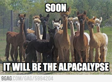 9gag:  The Alpacalypse.