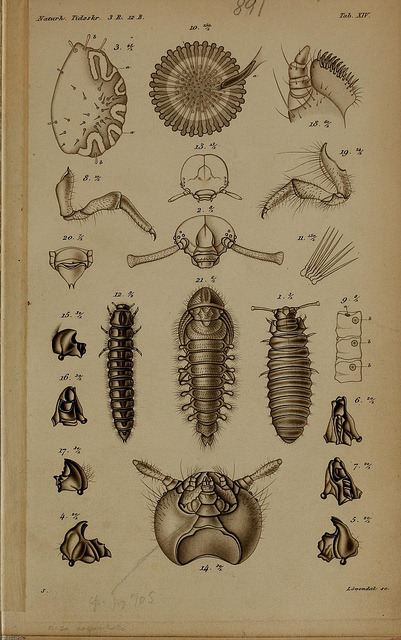 n173_w1150 by BioDivLibrary on Flickr.