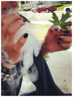 bobbysgin:  Smoking trees next to trees whose leaves looking like the ones I was picking from this morning.
