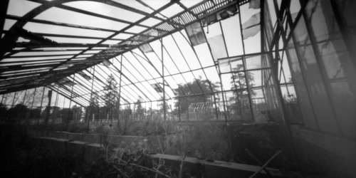 Inside the greenhouse II Holga WPC / Rollei RPX100