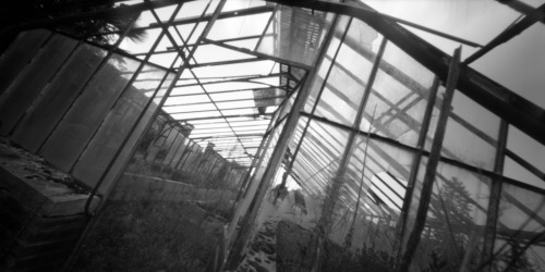In the greenhouse Holga WPC / Rollei RPX100