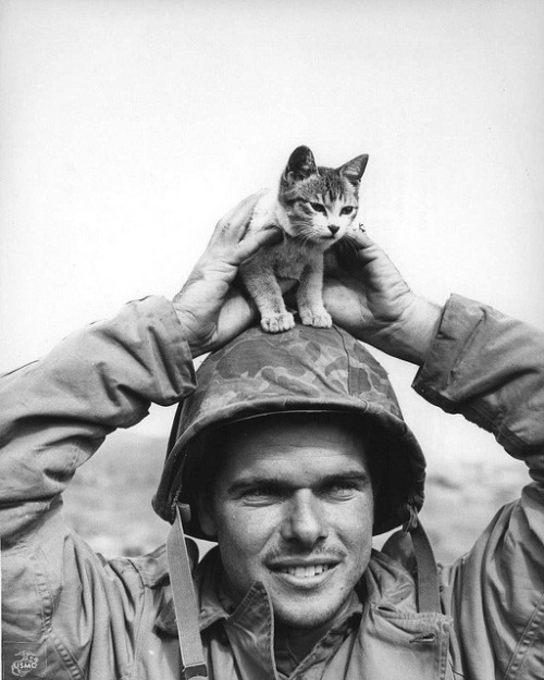 sinuses:  Corporal Edward Burckhardt, of Yonkers, New York, holding a kitten that he found at the base of Suribachi Yama on the battlefield at Iwo Jima when he came ashore with the 5th Marine Division, 1945.