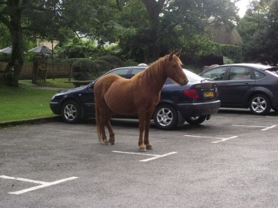 "funnyordie:  ""My car has a lot of horsepower."""