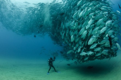 carlzimmer:  An awesome courtship swarm of Bigeye fish  (via David and Goliath - National Geographic Photo Contest 2012 - National Geographic)