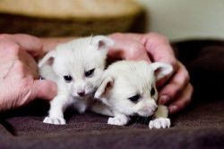 Could fennec foxes BE any cuter?!