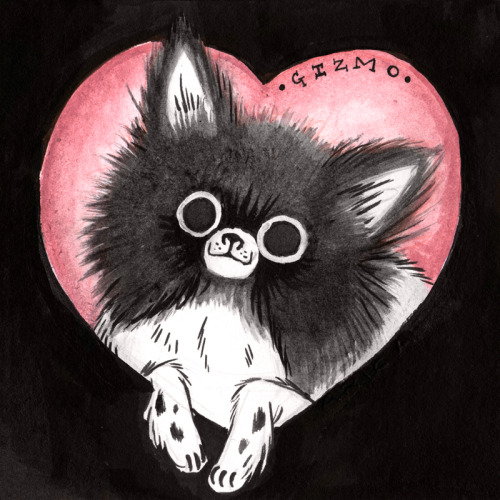 the-critter:  It's my sister's birthday today, so I drew her Pomeranian, Gizmo. Happy Birthday, Dana!  This is adorable!! <3