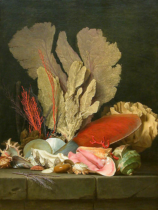 oldpainting:  Anne Vallayer-Coster, Sea Plumes, Lithophytes and Shells, 1769