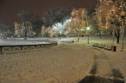 Snowy Stroll in the Park