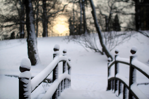 mentalmaelstrom:  First Snow in Stockholm (by szefi)