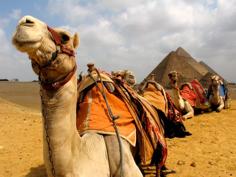 lifeissuchabeach:  camels and pyramids…