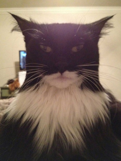 Nananananananana CATMAN! This clawed crusader has been all over the Internets. Thanks, Reddit.
