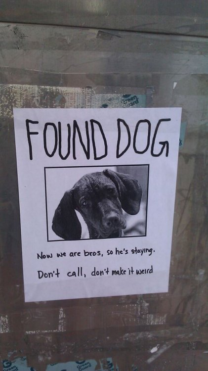 Found Dog  Finders keepers, dawg.