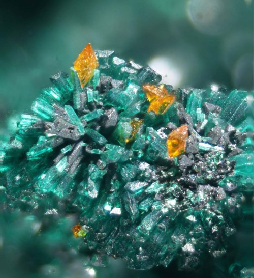 crystal-porn:  Wulfenite and Atacamite