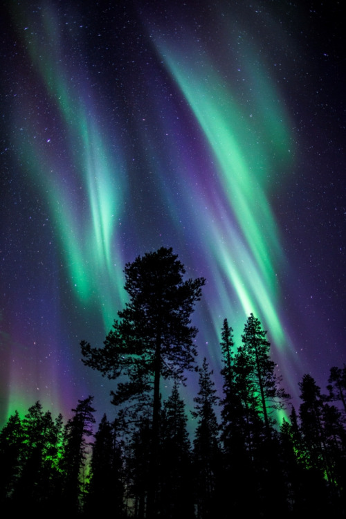 winterghosts:  Colours of the Aurora Borealis by The Aurora Zone