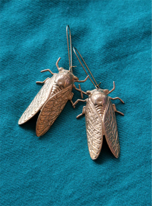 everydayexpenses:  Cicada Earrings, purchased from Fab.com