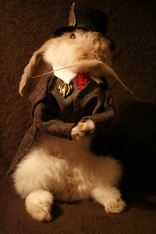 Rabbit with moustache, taxidermy commission