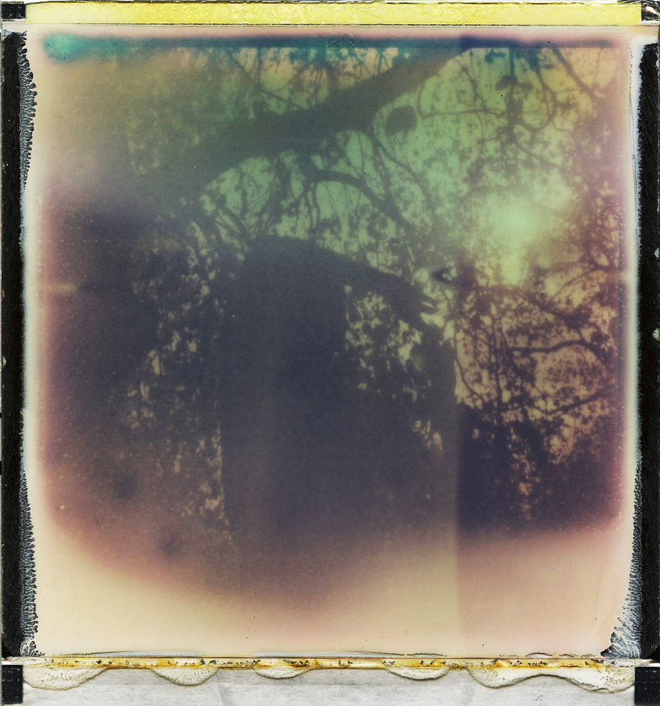 left you in the sun  (polaroid x impossible project.  px70 push)