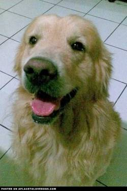 I miss him so much!!! Parker, my Golden Retriever died of urolithiasis three years ago. I was so sad because he died three days after I moved away from home to go to grad school Submitted by Stella T Original Article