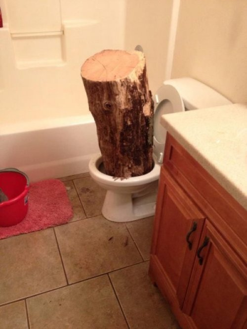 Someone Literally Left a Log in the Toilet Geez, what a dump.