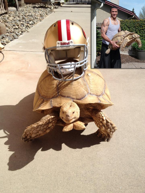 49ers QB Colin Kaepernick and his 115-pound pet tortoise named Sammy.