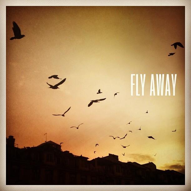 #typo #fly #lisbon #birds #p3top #instagod #typocollector