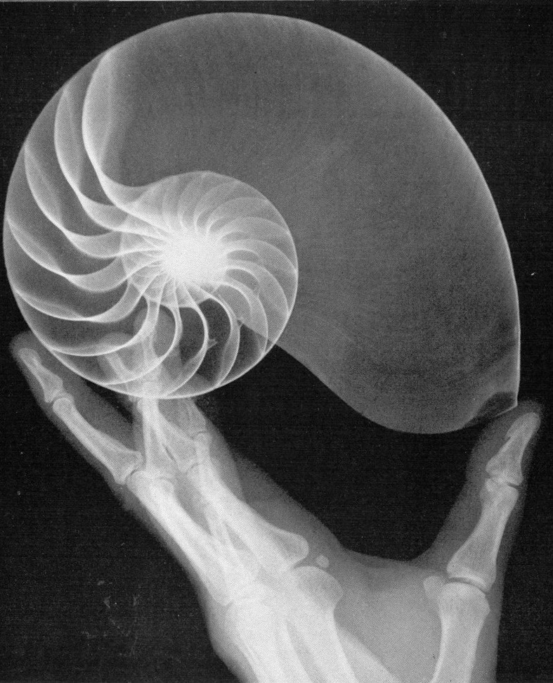 x-rays reveal the inner beauty of shells