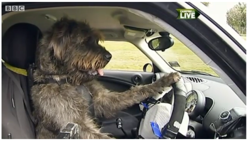 A charity in New Zealand is teaching rescued dogs how to drive a car. The canine driving school is aimed at proving how intelligent the animals can be. Monty the giant schnauzer is among the novice drivers who have learned to control the brakes, gears and steering wheel. Bill Hayton reports, BBC News  Is sobbing.