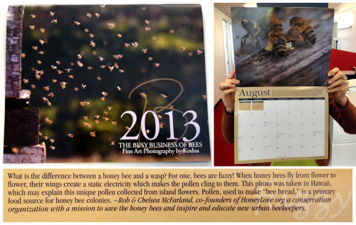 HoneyLove.org featured in 2013 HONEY BEE Calendar created by award-winning photo-journalist / beekeeper Kodua Galieti.  We are the month of AUGUST ♥ Which you all know is an awesome month ♥ August 17th, 2013 = NATIONAL HONEY BEE AWARENESS DAY!!