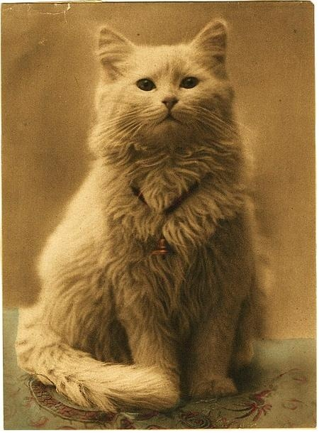Victorian cat portrait done in relief half-tone, with applied colour. 1880-1890