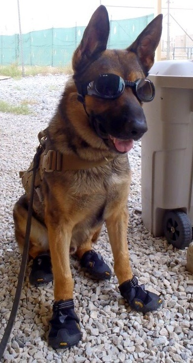 this dog is cooler than anyone ever.