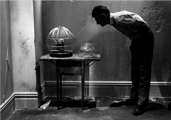 "Steve Schapiro     Samuel Beckett Looking at Parrot, New York      1964    ""Every word is like an unnecessary stain on silence and nothingness.""  Samuel Beckett"