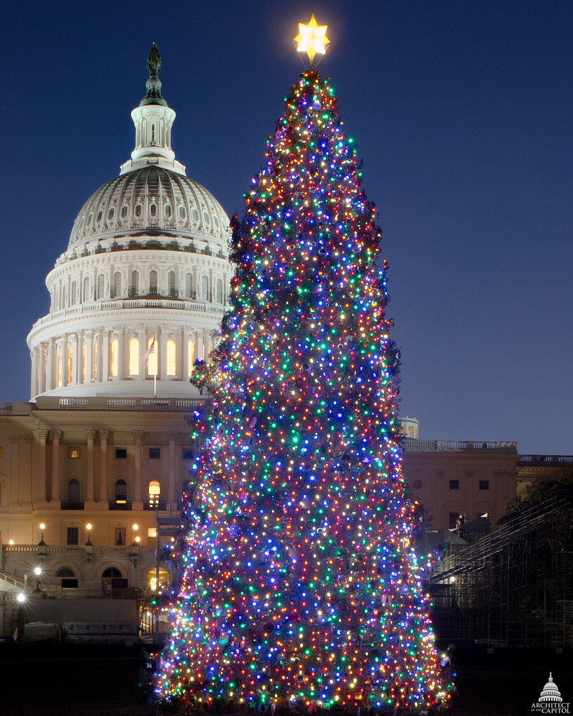 Image description: This year's Capitol Christmas tree is a 65-foot Engelmann spruce from the White River National Forest in Colorado. Photo from the Architect of the Capitol
