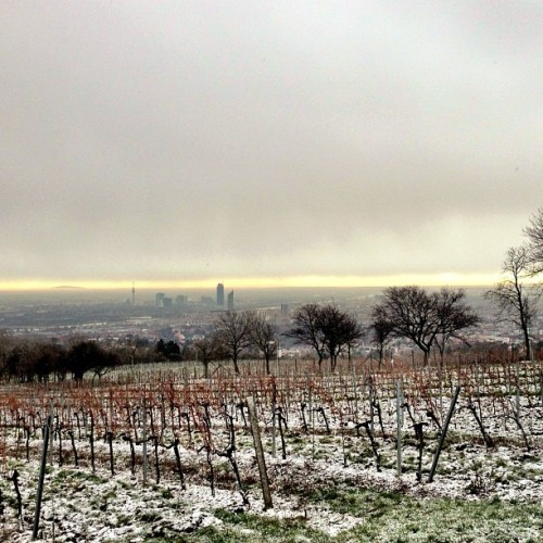Winter is coming to Vienna #scenery #overview #vienna #wien #cobenzl #snow #landscape #city #cloudy (at Cobenzl)