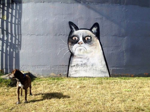 Grumpy cat graffiti by Paul Walsh