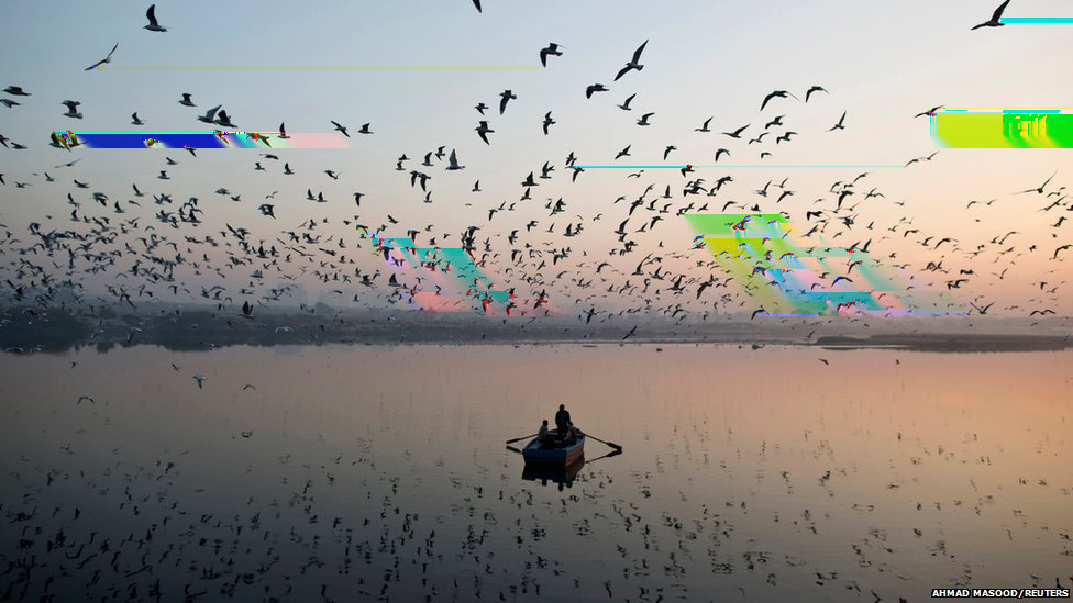 Migratory birds fly above men rowing a boat on the Yamuna river in the old quarters of Delhi.