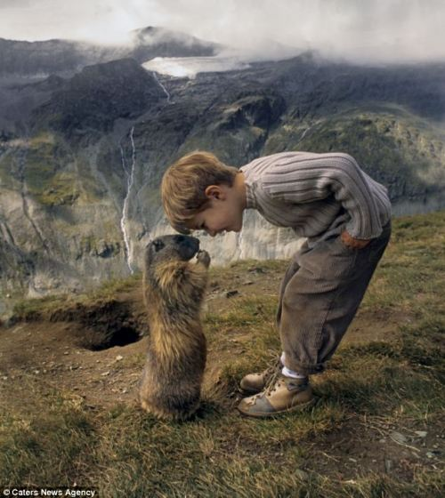 frasersbogusjourney:  theanimalblog:  The marmots and me: The schoolboy, 8, who has struck up a remarkable friendship with a colony of alpine animals. Read more  So jealous
