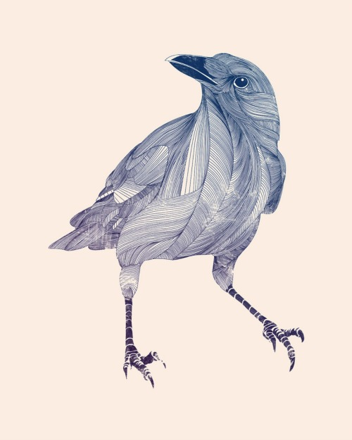 Crow drawing my Mondayne
