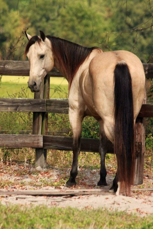 moody-mare:  Picture belongs to Starting Over Ranch.