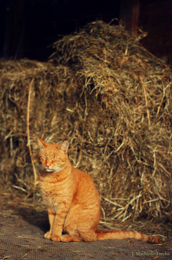 barn kitty on Flickr.