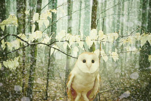 underthesamesofa:  (via Winter Owl (For Sale))