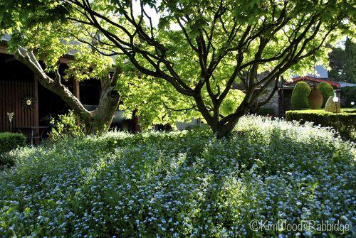 Our australian gardens dursley a new england garden for Rural garden designs australia
