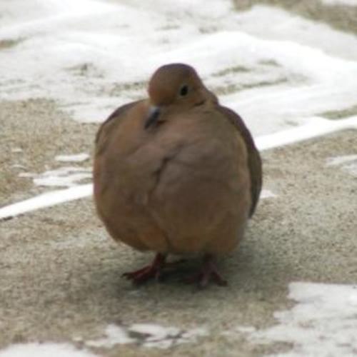 dove orb theme