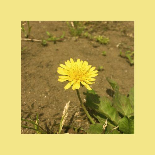 민들레 Dandelion (Single Ver.)