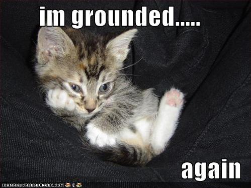 lol cat grounded