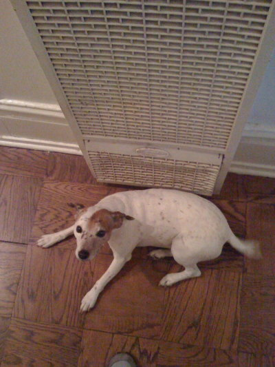yeah, i get it. the heater is hot, i'm a dog. hot dog. it's just not funny.